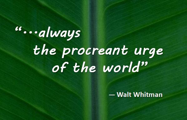 Walt Whitman - always the procreant urge